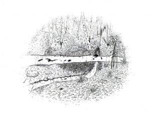 dessin-ruisseau